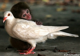 monkeypidgeon.jpg